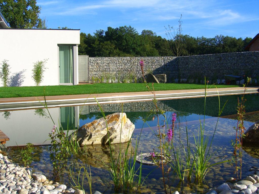 FREIRAUM Swimming Pond Wasserpflanzen