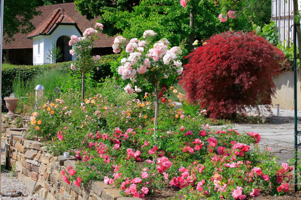 FREIRAUM Garten mit Rosenbeet